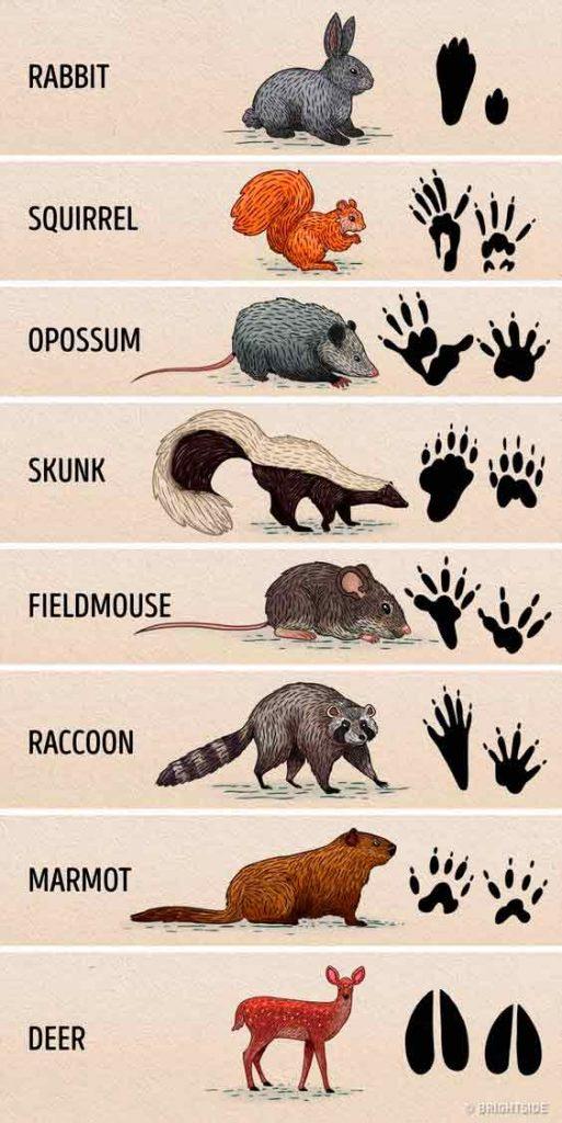 historietas de animales del zoologico